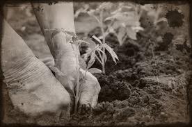coltivare terra